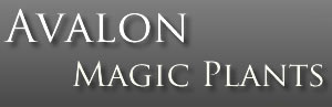 avalon_logo1